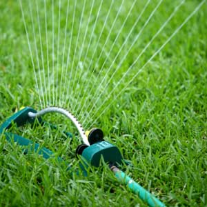 Sprinkler watering the lawn